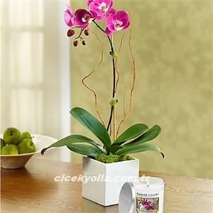 Tekli Renkli Orkide Gönderimi