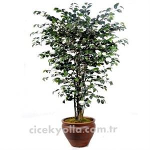 Yapay Kamelya Ağacı