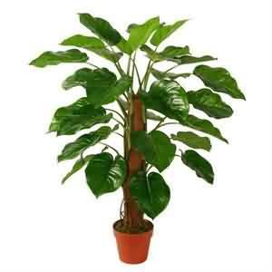 Yapay Tropik Bitki