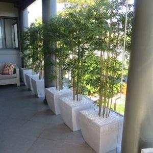 5li Saksılı Bambu Dizaynı