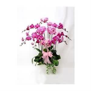 10 dallı sevdiklerinize orkide