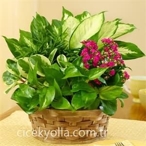 Sepette Karışık Yeşil Bitkiler
