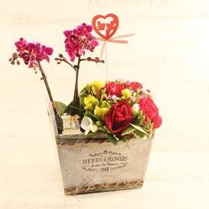Sevgiliye Özel Orkideler