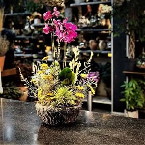 Orkideli Kuru Çiçek