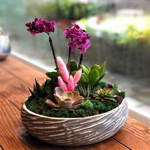Minimal Orkide
