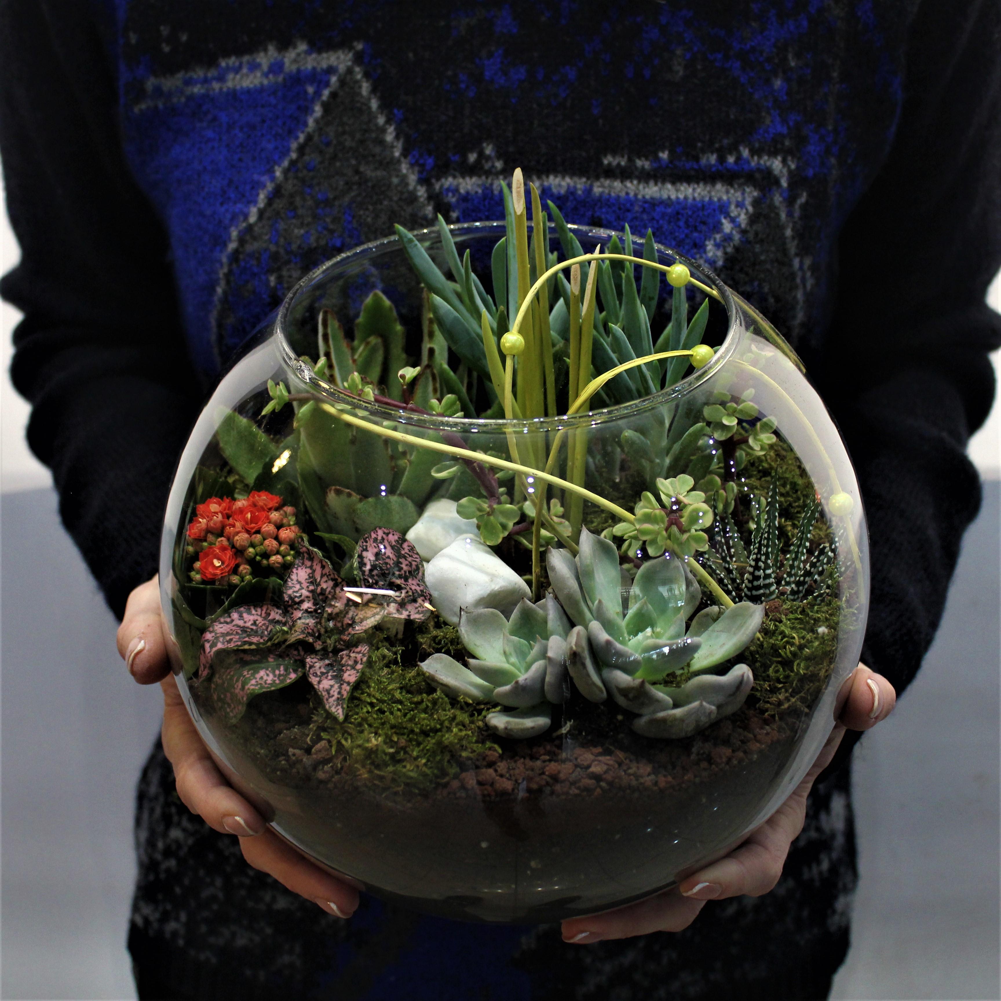 Fanusta Succulent Bahçesi