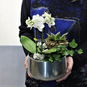 Beyaz Mini Orkide