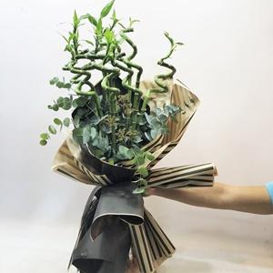 Şans Bambusu