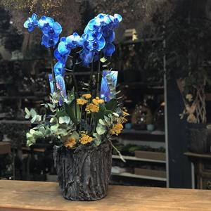 Stabil Kuru Çiçek 4lü Mavi Orkide