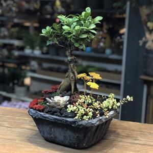 Ginseng Bahçesi