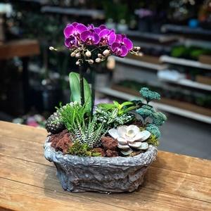 Mini Orkideli Sukulent Arajmanı