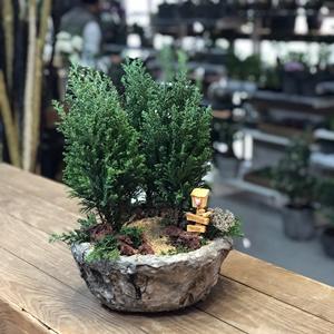 3 Lü Çam Ağacı