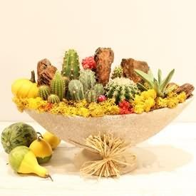Succulent Kaktüs