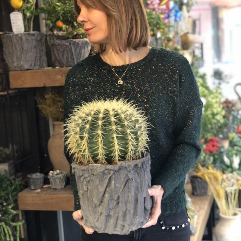 Echinocactus Grusonii Intermedius Cactus