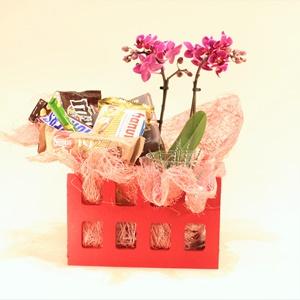 Tatlı Mini Orkide