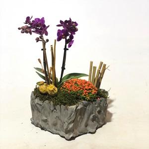 Kalpli Orkide