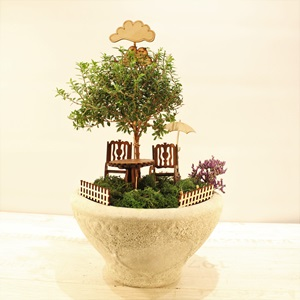 Mini Bonsai Bahçesi