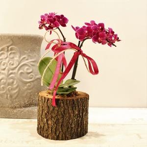 Meşe Ağacında Mini Orkide