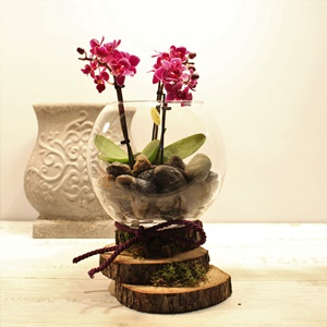 Camda Mini Orkide