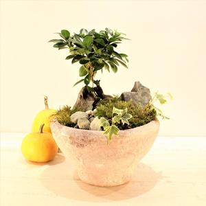 Dekoratif Saksıda Ginseng Bonsai