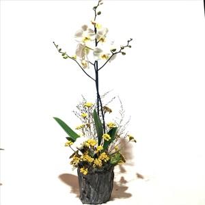 Stabil Kuru Çiçekli Beyaz Orkide
