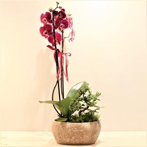 Orkideli Bonzai