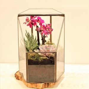 Prizma Camda Orkide
