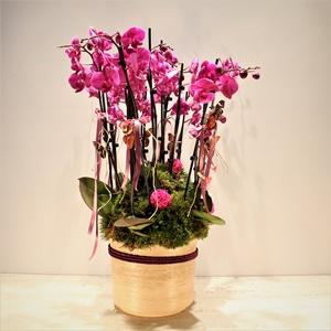 Vip Orkide Arajmanı