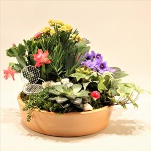 Yılbaşı Çiçeği Arajmanı