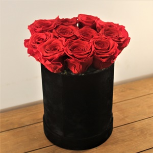 Büyülü Aşk Kırmızı Güller