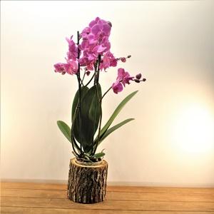 Saksıda Orkide