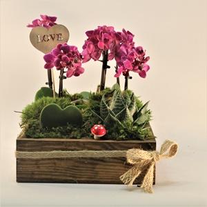 Orkide Ve Kalpli Sukulent