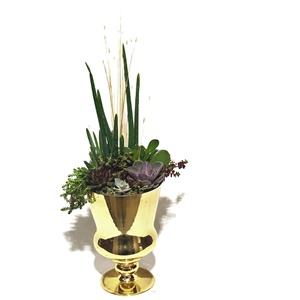 Gold Vazoda Alovera Teraryum Dizayn