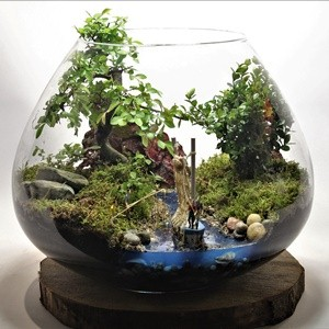 Bonsai Terraiums