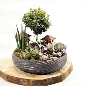 Dekoratif  Succulent Dizayn