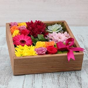 Kutu Mevsim Çiçekleri