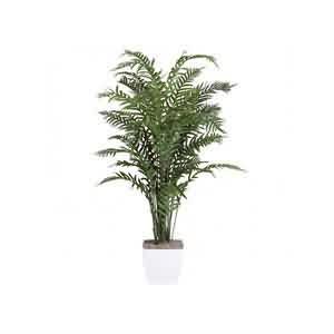 Palmiye Areka Ağacı