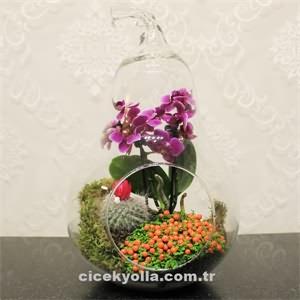 Armut Camda Orkide