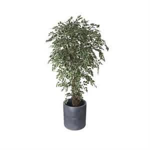 Yapay Ficus Benjamin