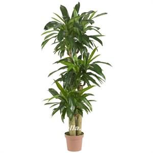 Yapay Dresena Ağacı