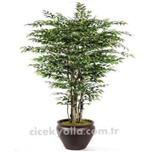 Yapay Smilaks Ağacı