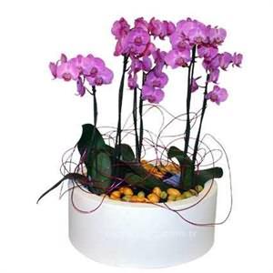 5li Mor Orkide Siparişi