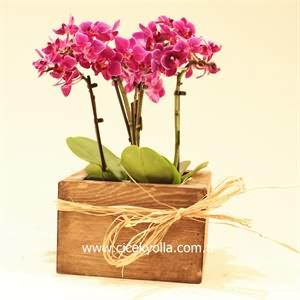 Minyatür  Orkide Siparişi