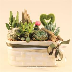 Saks� Echinocactus