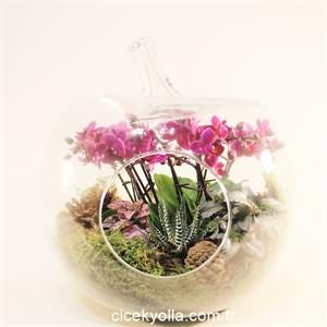Kakt�s ve Orkide Arajman�