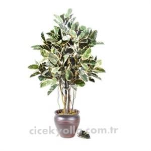 Beyaz Yapay Kauçuk Ağacı