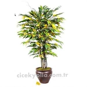 Yapay Mimoza Ağacı