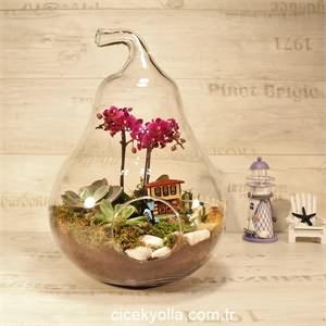 Orkide Terrarium