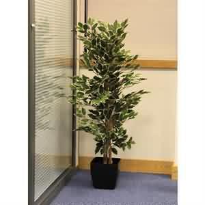 Alaca Beyjamin Ağacı