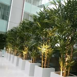 Yapay  Bambu Uygulaması